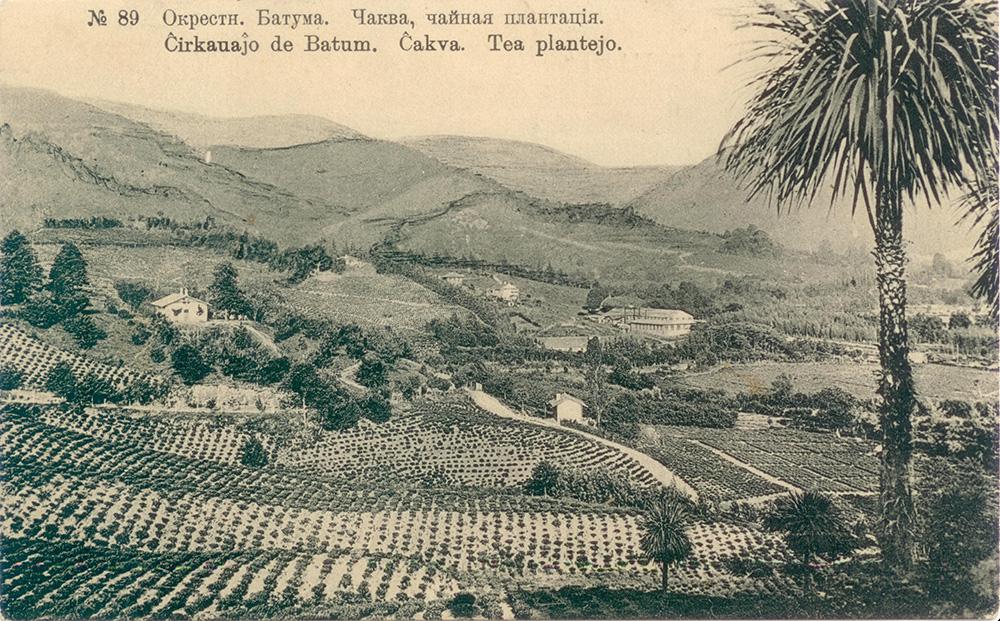 Чайная плантация в Батуми