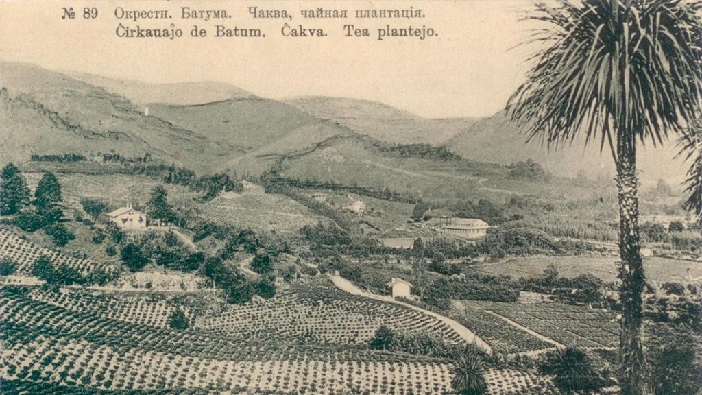 чайная плантация окрестности Батуми