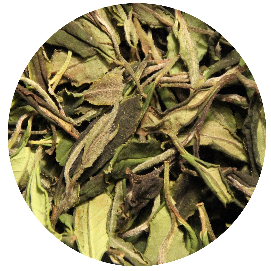 Georgian wild white tea Shota Bitadze