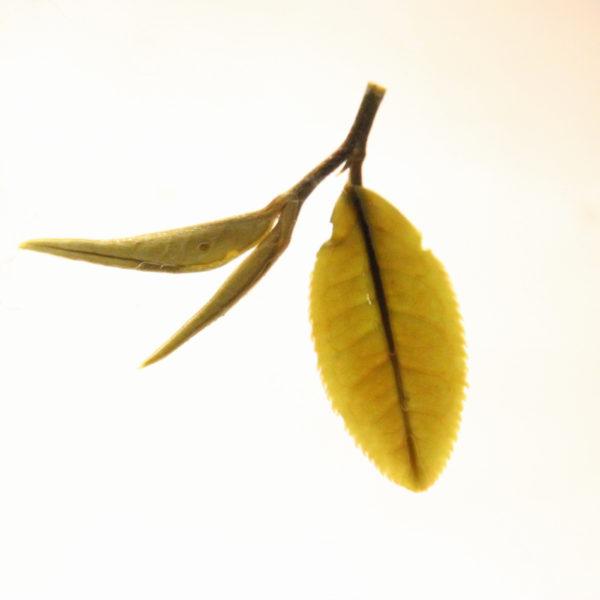 Грузинский высокогорный дикий белый чай лист