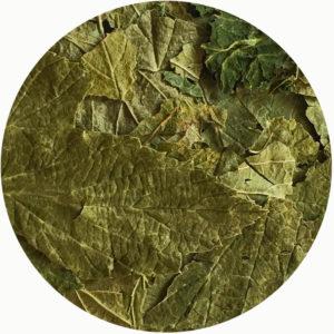 Лист чёрной смородины