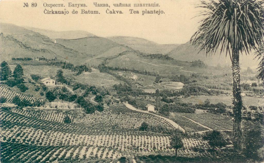 Грузинский чай: возрождение традиций