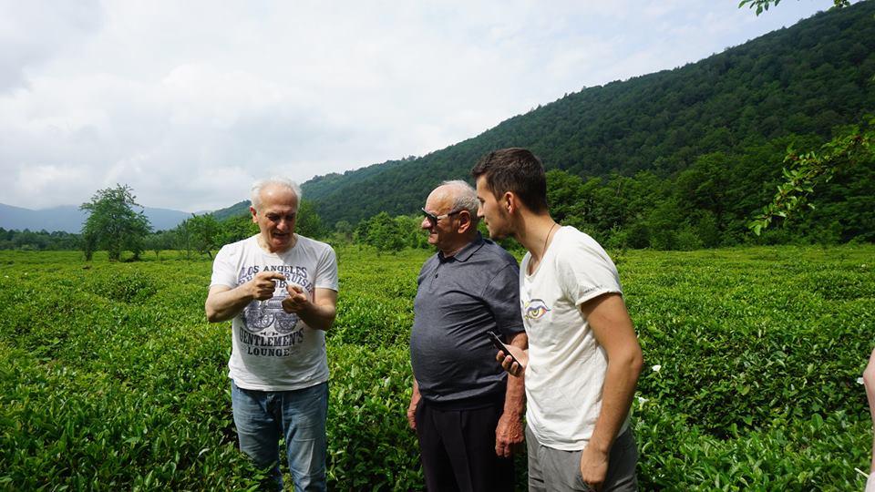 Чай против рака и радиации